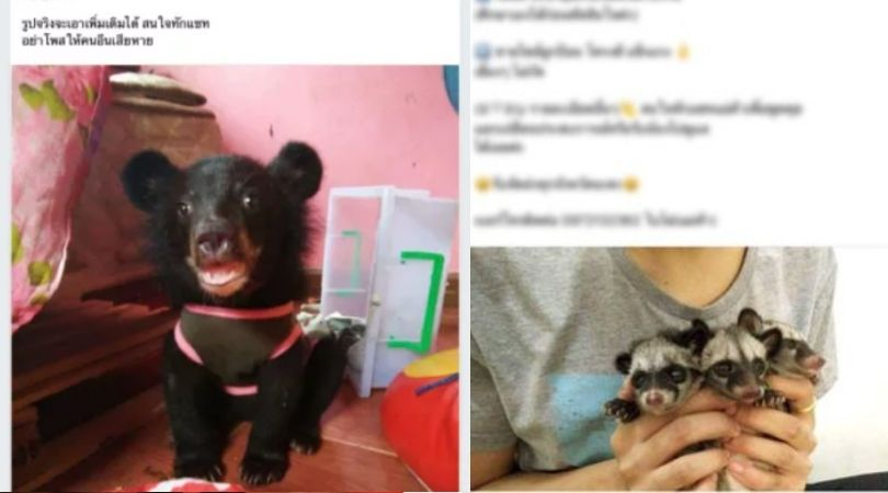 SIGN: Stop Endangered Animal Trafficking on Facebook