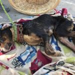 SIGN: Justice for Chance, Dog Neglected to Death on Chain