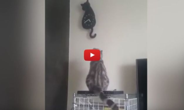 VIDEO: Hypnotized Kitty Moves Tail in Sync with Cat Clock