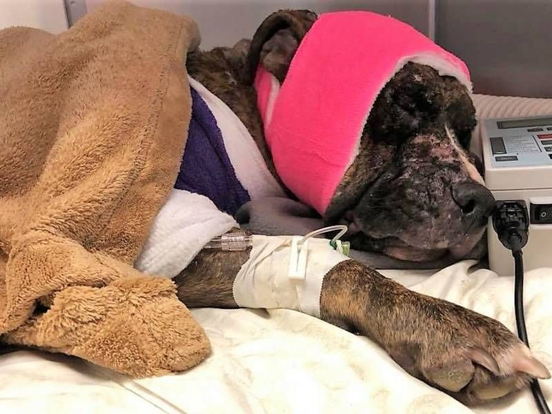 SIGN: Justice for Dog Doused in Accelerant and Set on Fire