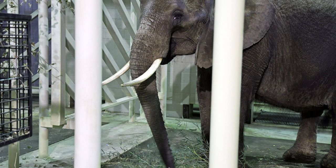 """""""Nosey's Law"""" to Ban Wild Animals in the Circus Passes NJ Assembly!"""