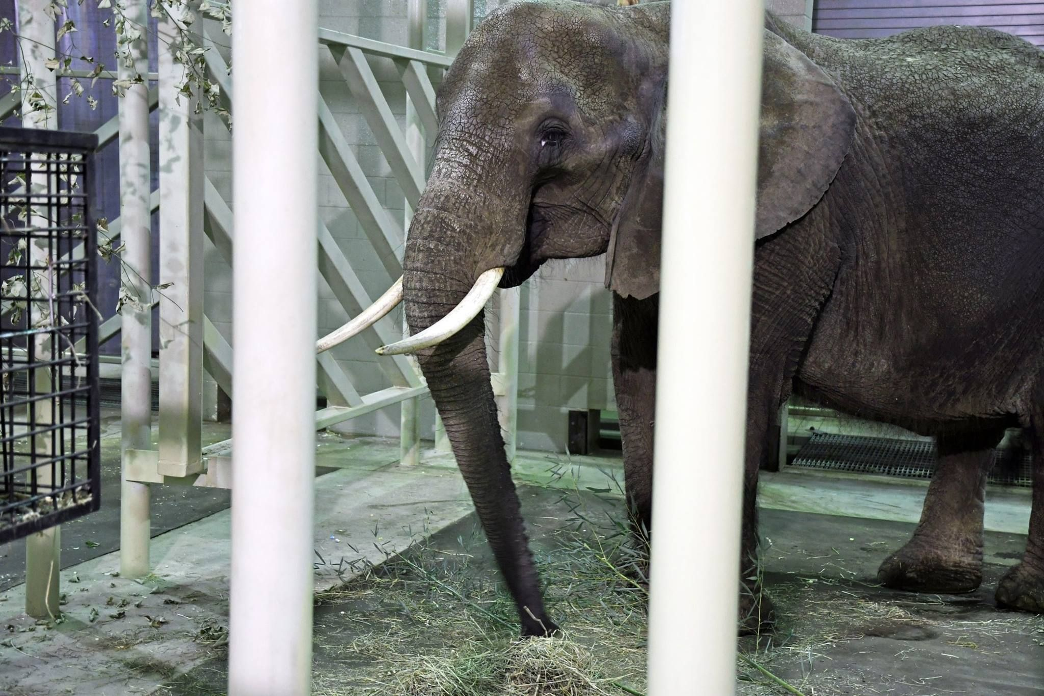 """Nosey's Law"" to Ban Wild Animals in the Circus Passes NJ Assembly!"