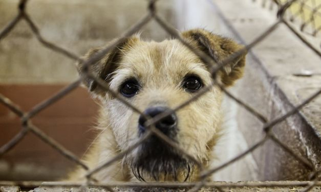 Sign: Denounce Sickening Proposal to Sell Egypt's Stray Dogs for Meat