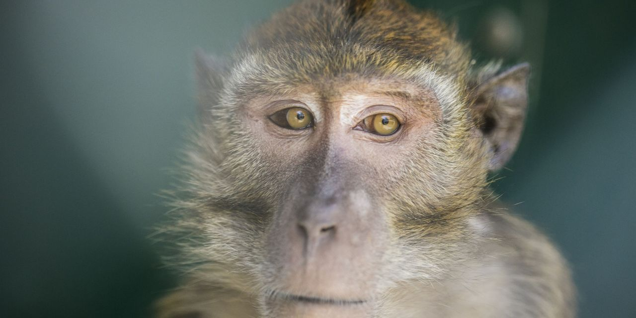 Cruel Lab Testing on Primates in the U.S. Hits All-Time High