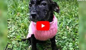 VIDEO: Puppy Abandoned in Box Could Not Stop Shaking - But Just Look At Her Now!