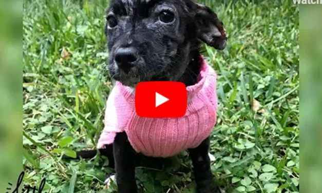 VIDEO: Puppy Abandoned in Box Could Not Stop Shaking – But Just Look At Her Now!