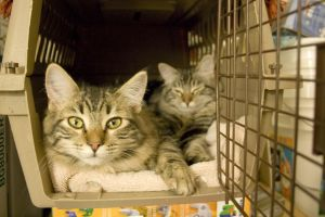 Cats rescued from Hurricane Michael