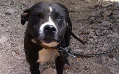 SIGN: Pass Stronger Laws in Ecuador to Save Animals from Torture