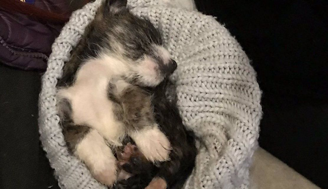 SIGN: Justice for Puppy Tied in Plastic Bag and Dumped Like Trash