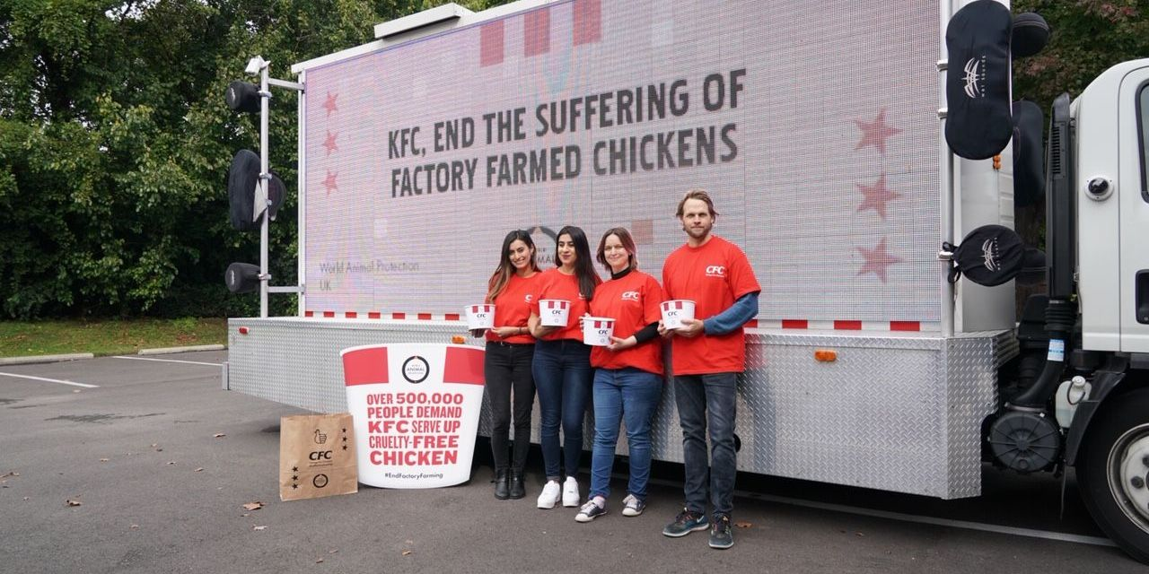 500,000 People Tell KFC: No More Cruelty to Chickens!