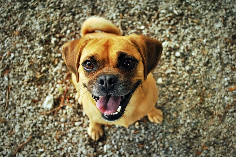 PAWS II Act Passed in 'Huge Leap Forward' for Animal Protection