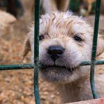 SIGN: Stop Pet Sales from Cruel, Filthy Puppy Mills in Atlanta