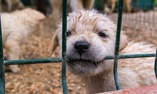 SIGN: Stop Pet Sales from Cruel, Filthy Puppy Mills in Atlanta