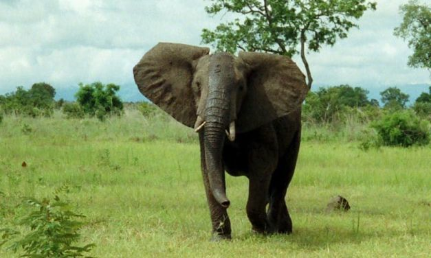 Congo Creates New Park to Protect Endangered Elephants, Gorillas and More