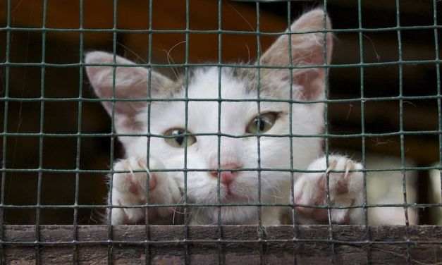 SIGN: Stop the Heartless Extermination of Cats in New Zealand