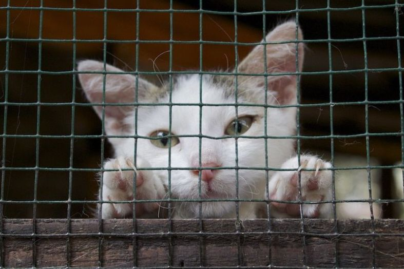 SIGN: Stop the Heartless Extermination of Cats in Auckland, NZ