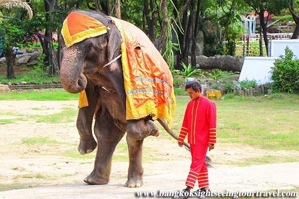 SIGN: Free Emaciated Elephants Forced to Perform at Cruel Thai Zoo
