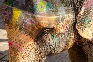 indian circus elephant