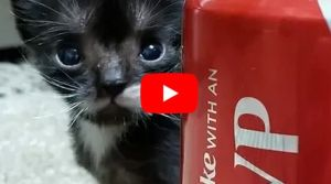 VIDEO: Miniature Cat Finds the Best Forever Family