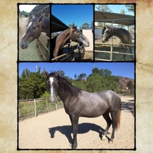 Moses Was Once Sold to A Kill Buyer - But Now, He's A Completely Different Horse!