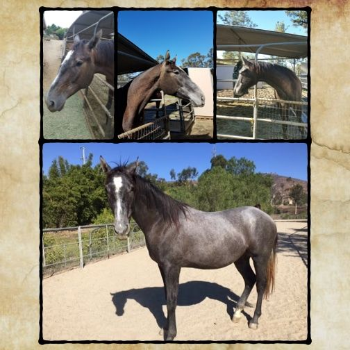 Moses Was Once Sold to A Kill Buyer – But Now, He's A Completely Different Horse!