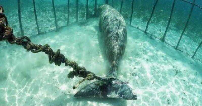 SIGN: Shut Down Cruel 'Whale Prison' off Russian Coast