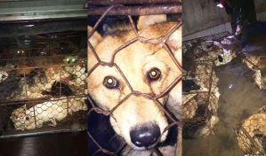 Dogs packed into tiny wire cages