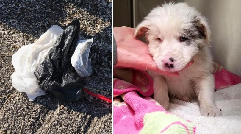 SIGN: Justice for Puppy Stuffed into Rock-Filled Bag, Thrown into Frozen Creek