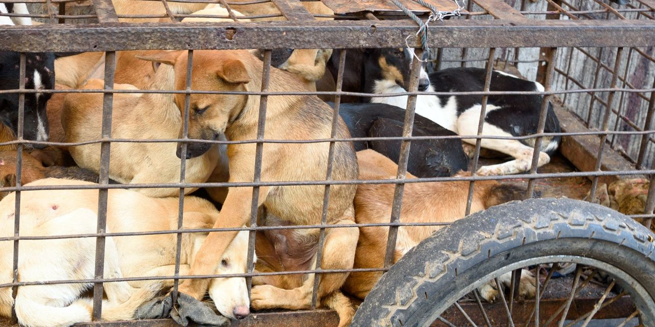SIGN: Outlaw Bali's Brutal Dog and Cat Meat Trade