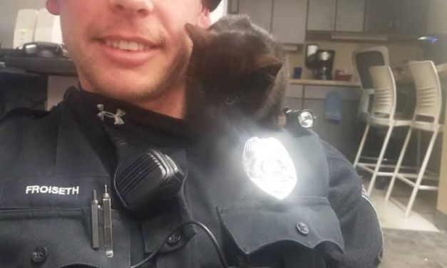 Hero Officer Adopts Homeless Kitten He Rescued from A Snowbank