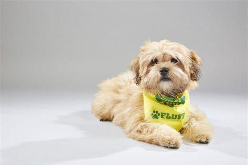 Melody Puppy Bowl Dog