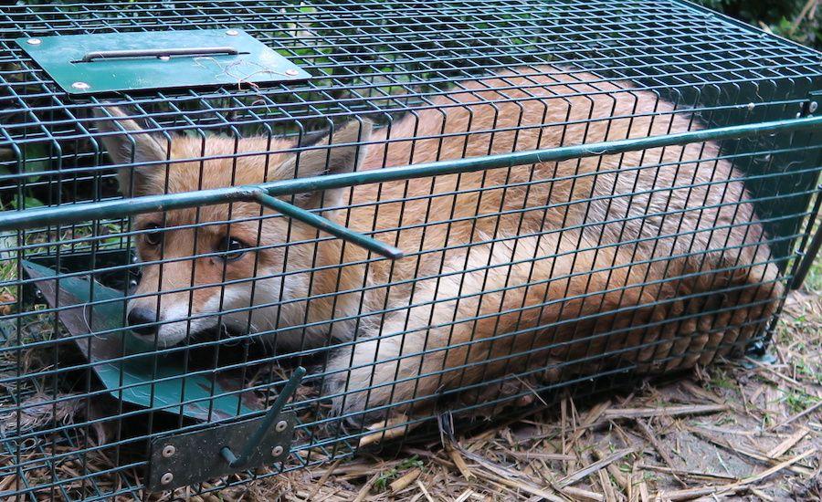 SIGN: Stop California's Cruel Animal Fur Trapping Trade