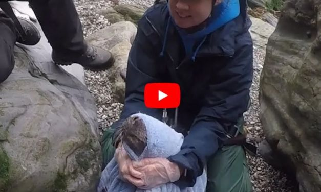 VIDEO: Baby Seal with Net Caught Around Neck Saved by Kind Rescuers