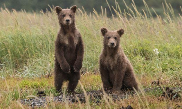 New Mexico Creates Wildlife Corridors Act to Save Animals' Lives