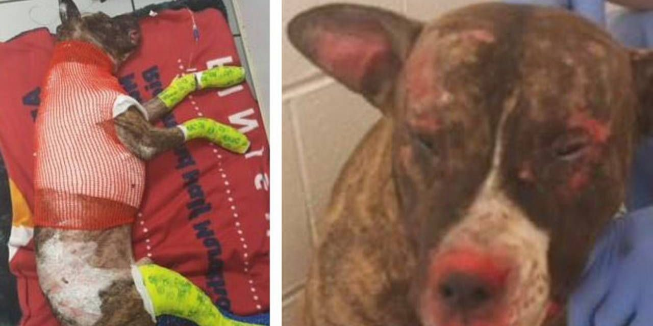 SIGN: Justice for Dog Tied to Pole and Set On Fire