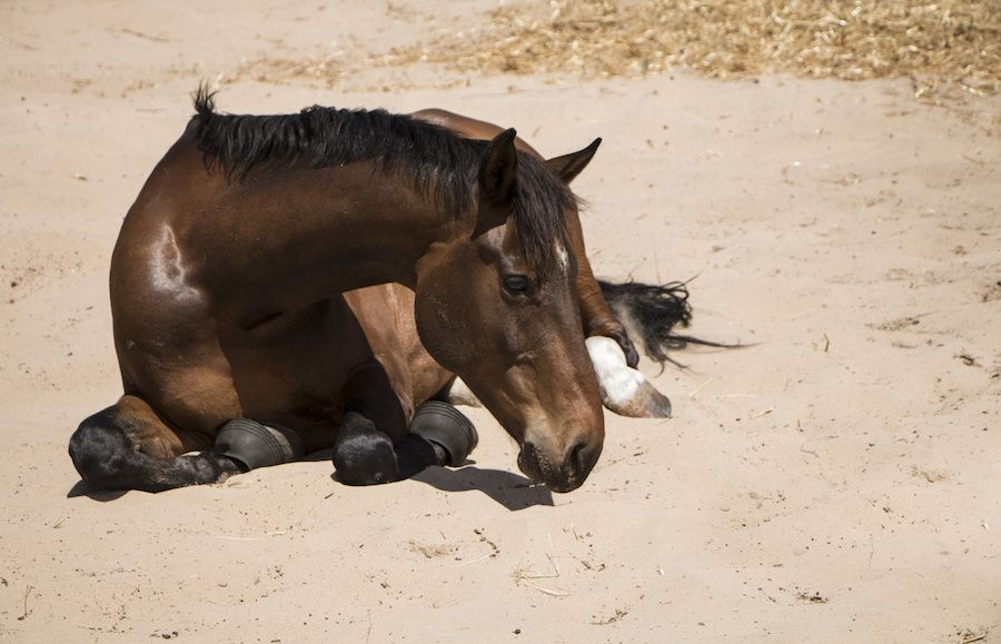 SIGN: Shut Down Race Track that's Killed 21 Horses in Just 2 Months