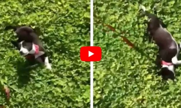 VIDEO: Watch This Rescued Puppy Feel Grass For the Very First Time