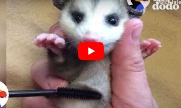 How Recycled Mascara Brushes Are Saving Baby Animals
