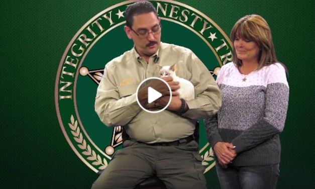 Florida Sheriff Adopts Abused Cat From Viral Video