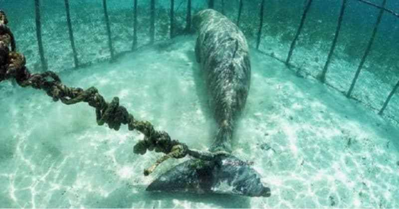 UPDATE: 100 Animals to Be Released from Russia's 'Whale Prison'