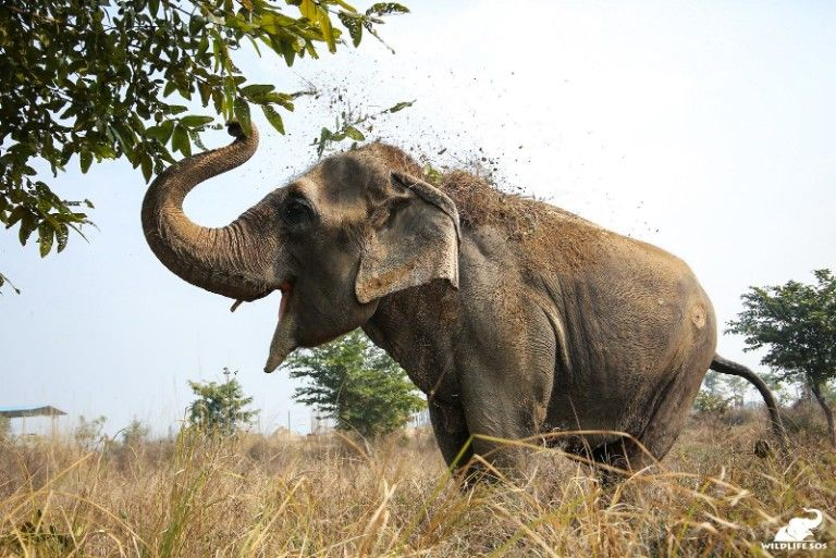 Very Special Patients Arrive At India's First Elephant Hospital