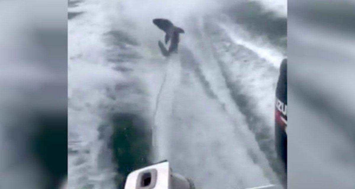 UPDATE: Boat Captain Jailed for Cruel Shark-Dragging Incident