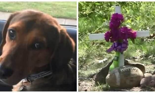 SIGN: Justice for Family Puppy Found Hanging From Noose in the Woods