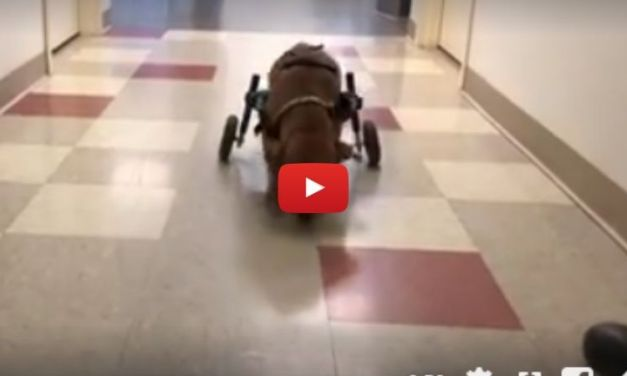 VIDEO: Abandoned Puppy Hit By Train Finally Has A Forever Home