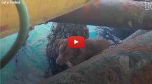 VIDEO: Workers Find Stranded Dog Swimming in Ocean 136 Miles from Shore