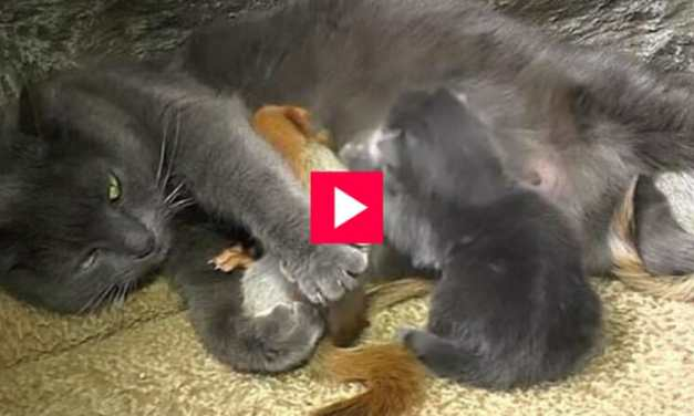 VIDEO: Sweet Mama Cat Adopts 4 Orphaned Squirrels