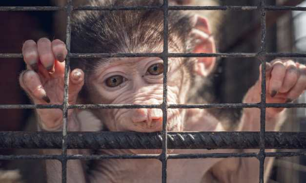 SIGN: Stop Dangerous 'Lab Gag' Bill That Would Let Vivisectors Torture Animals in Secret