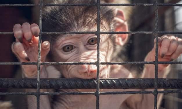 SIGN: Stop Dangerous 'Lab Gag' Bill That Would Let Vivisectors Torture Animals in Secret