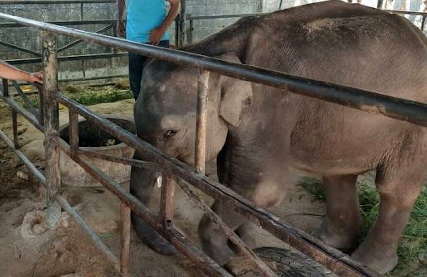 SIGN: Justice for Dumbo, Baby Elephant Whose Legs Snapped After Constantly Performing for Tourists