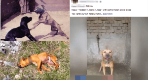 Facebook posts dogfighting investigation by Lady Freethinker